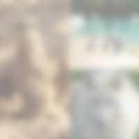 animaux sauvages zooparc de Beauval Loup Suricat Manchots proche des chambres d'hôtes de charme Traînefeuilles et du gîte au Four à Pain