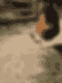 Les poussins de la Ferme de Samson