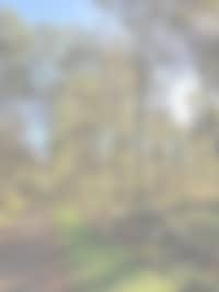 Foret - Le manoir de herouville