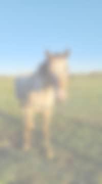 cheval - Le manoir de herouville