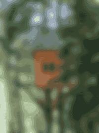 Nuits de Cimes - cabane à l'intérieur de la forêt