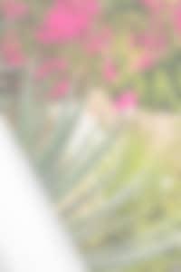 fleurs et mer - visiter les Antilles
