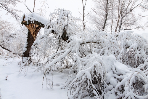There are few precautions you need to take if you want to outlast the harsh winter weather that's headed your way.