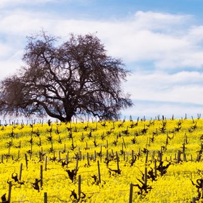 Napa & Sonoma Wine Country Tour