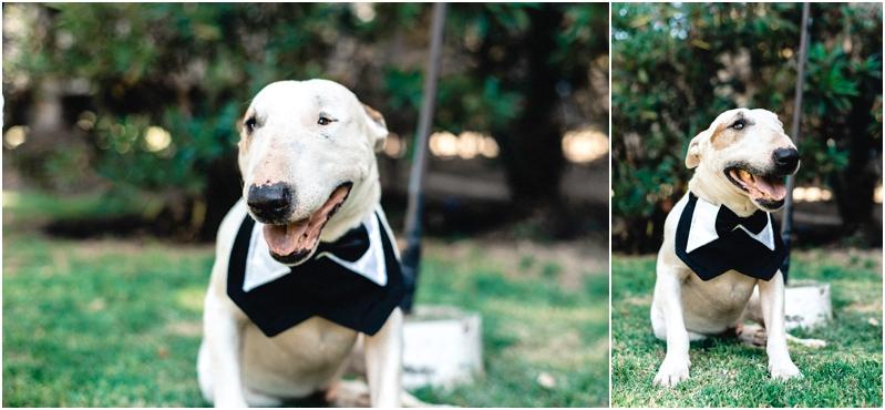 Fotografía de Matrimonio: Mascota con traje