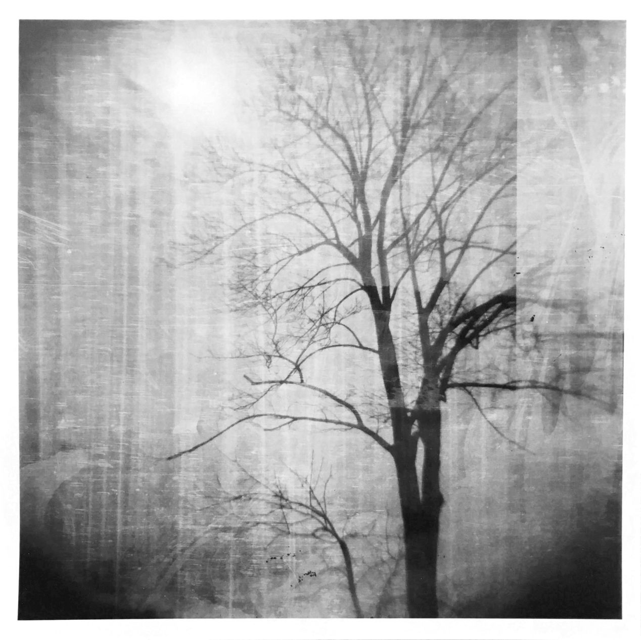 A photograph that was taken with medium format Lomography Holga 120 TLR camera and optically printed on paper.