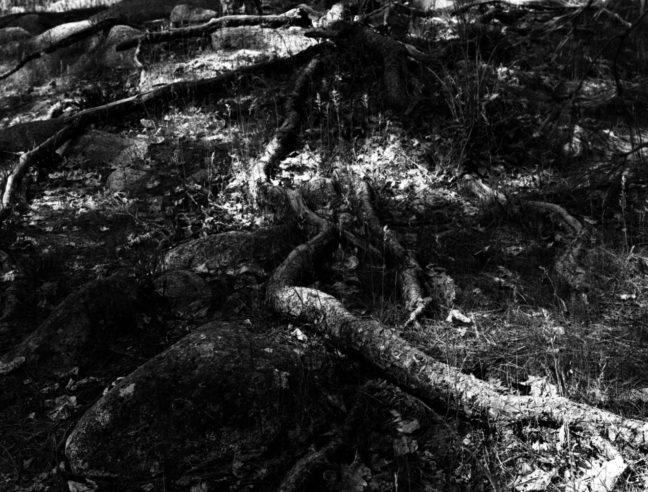 """Roots"" — shot on Arista 100, 4x5 at Wenatchee River, Leavenworth Wa."