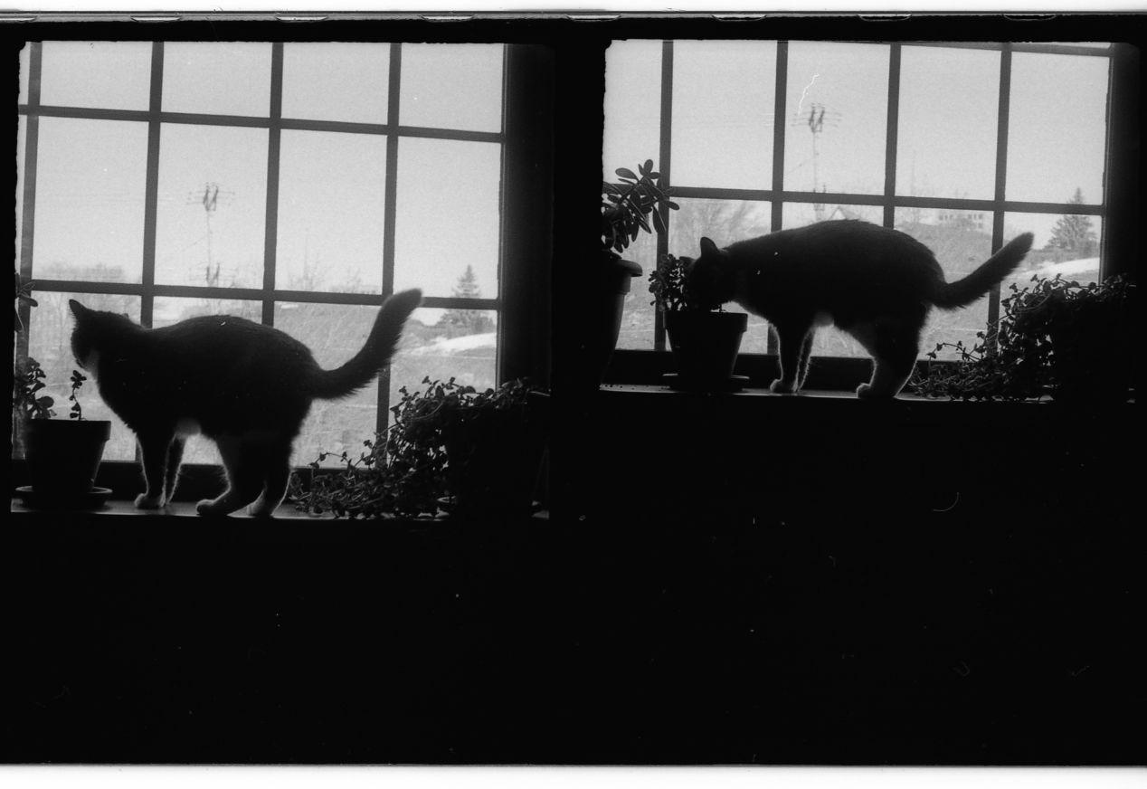Cumbia. Appleton, Wisconsin. Chaika II. Kodak 400 TX.