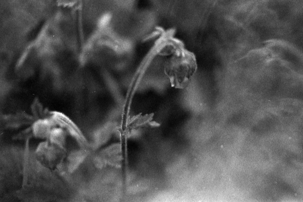 """""""Little Faith"""" (2020) — shot with Ilford Delta 3200, Nikon F100, 55mm macro lens, and a prism."""