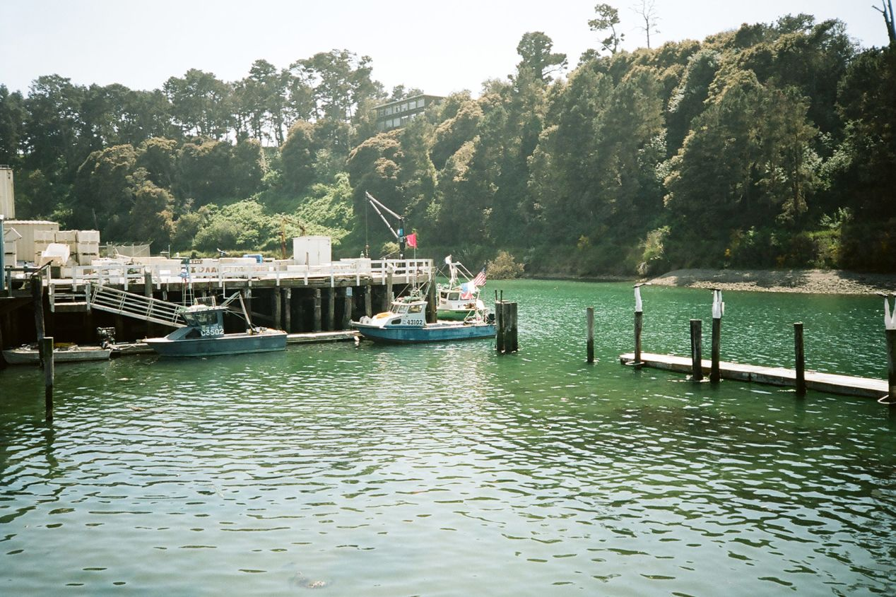 Noyo Harbor Fishing Dock, California. Olympus mju-II, Kodak Portra 400.
