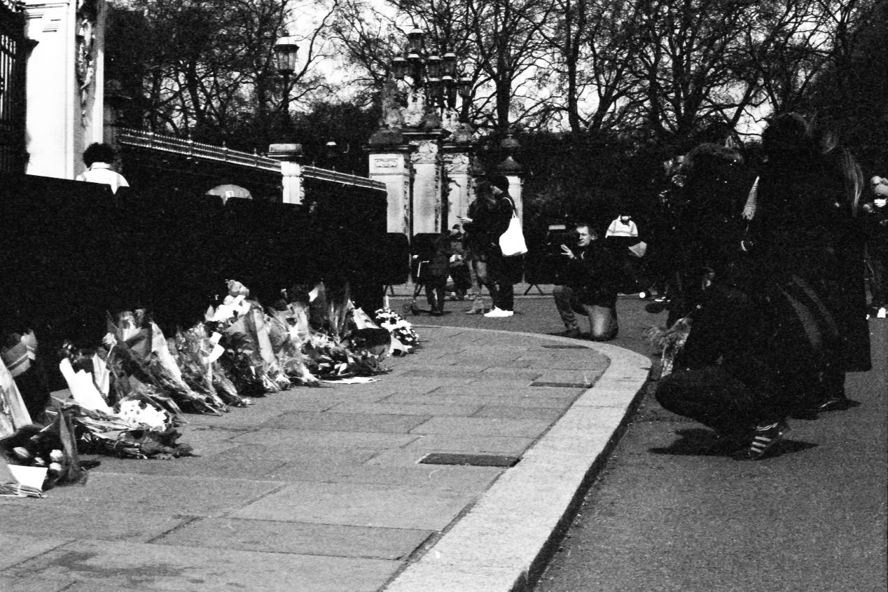 Flowers at the gates, Buckingham Palace, London, 9-10 April 2021. Taken on the Canon EF with a Tamron 17 mm f./3.5 lens on Eastman Double-X film.