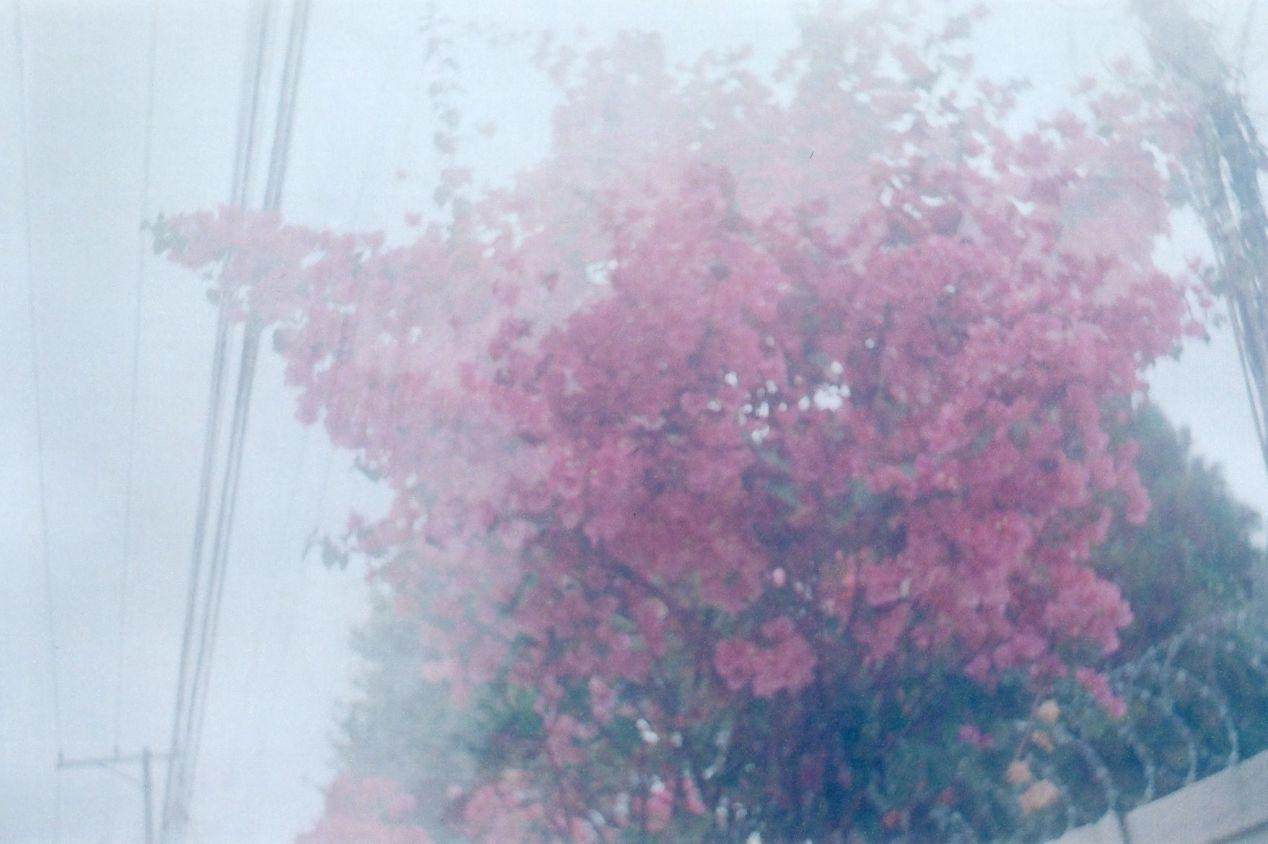 """Room to Bloom."" Smena 8, 40mm lens, Kodak ColorPlus 200."