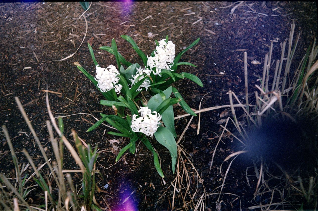 Fujicolor Superia 200 with Industar-10. The light leaks are coming from the lens barrel.