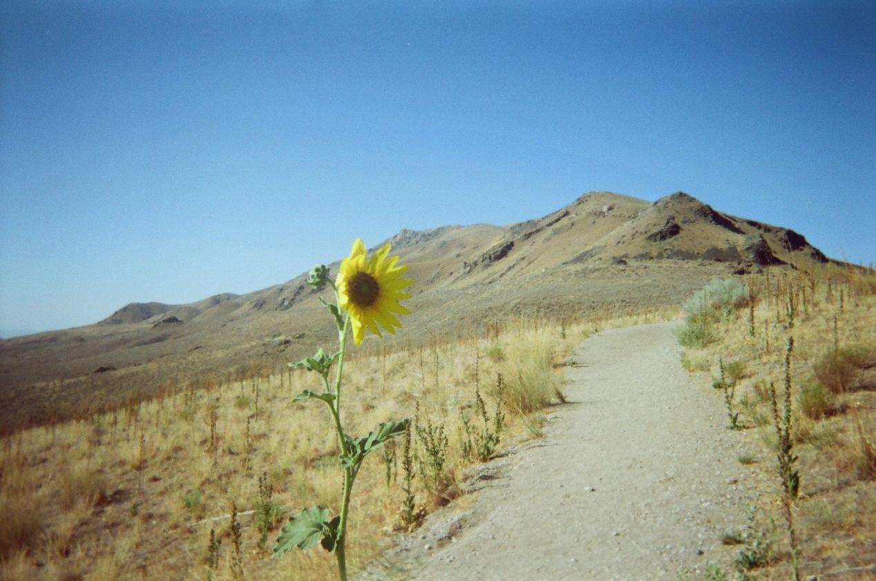 Frary Peak, Antelope Island.