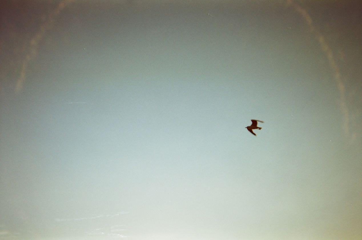 Sunset Gull, Antelope Island.