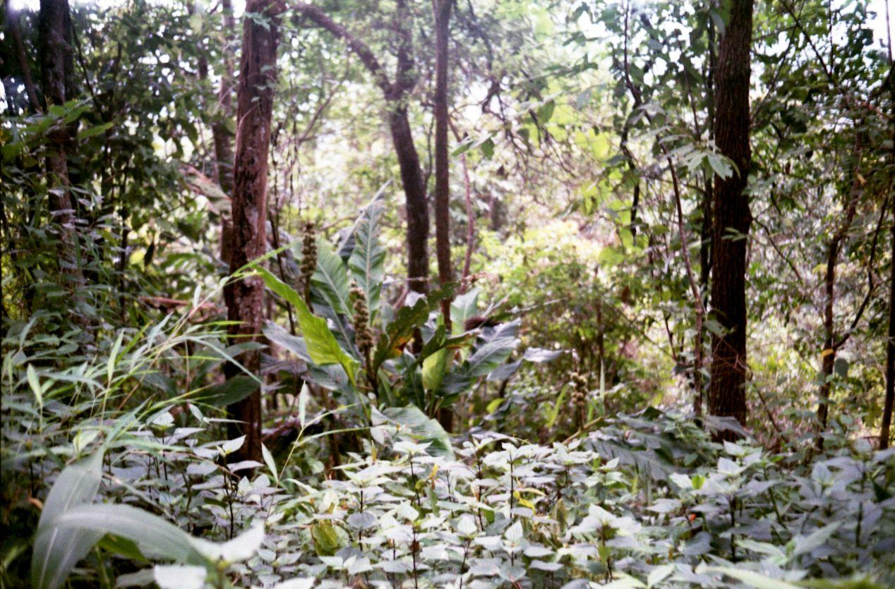 Rain forest at the Doi Suthep national park. Agfa Vista 400. I love this film.