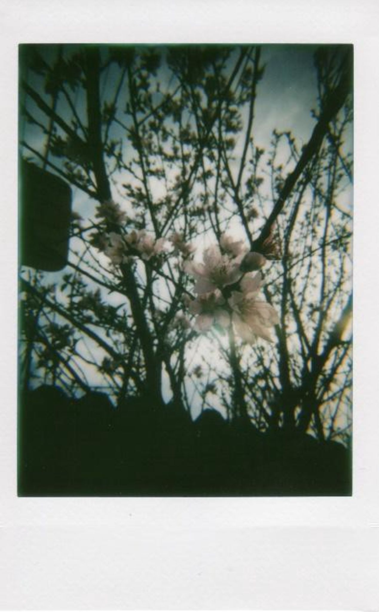 Photo of a blooming flower as spring approaches. It's a little dark because I'm still fumbling my way around with the new Lomo Instant.