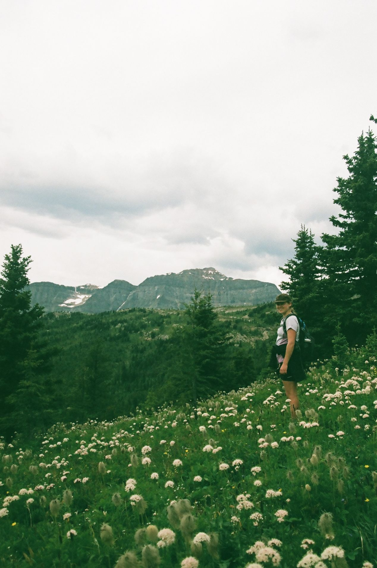The wildflowers are beautiful at Sunshine Village in the summertime.