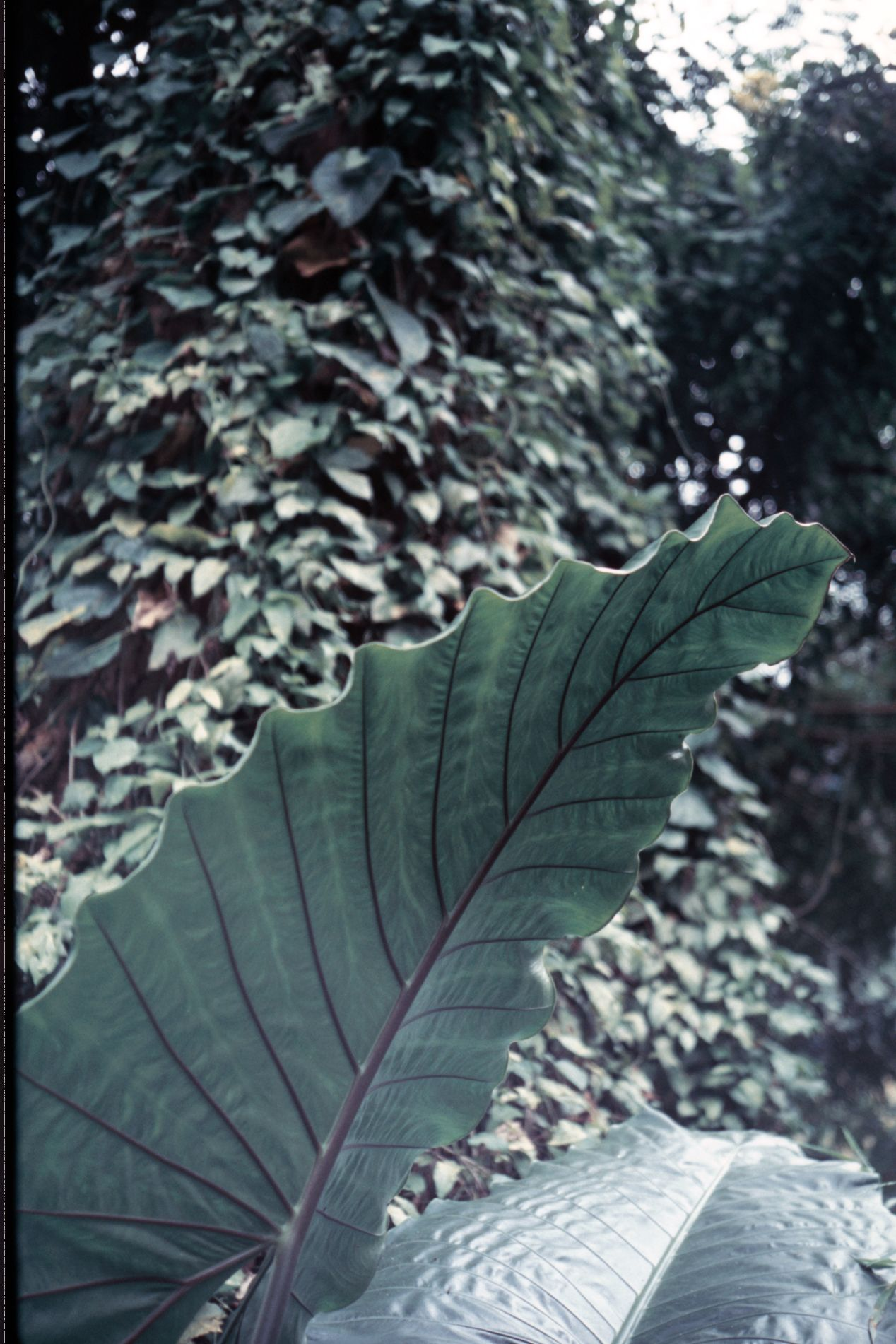 Fujichrome Velvia 100 — discontinued in the US due to environmental regulations.