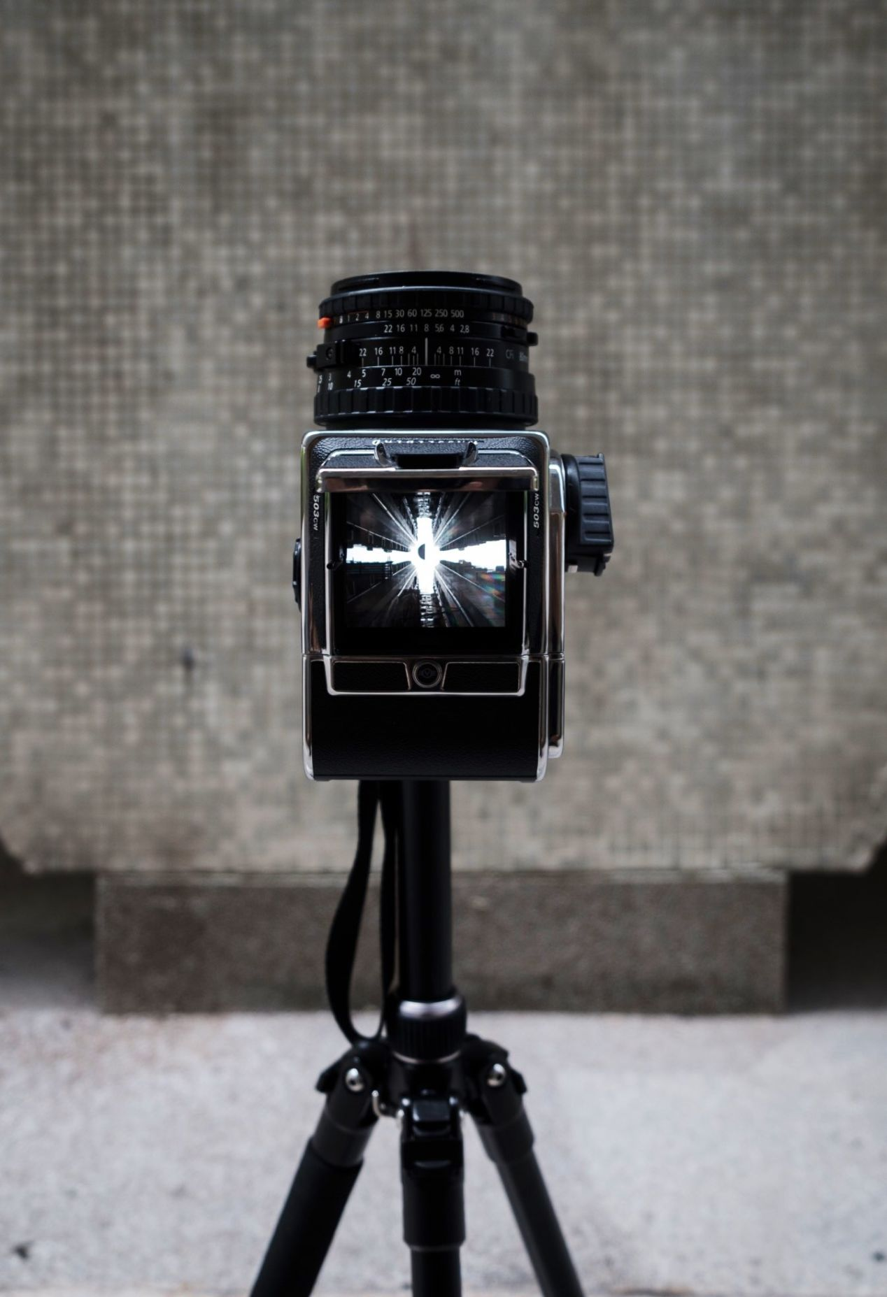Hasselblad 503CW with the CFV-50C digital back.