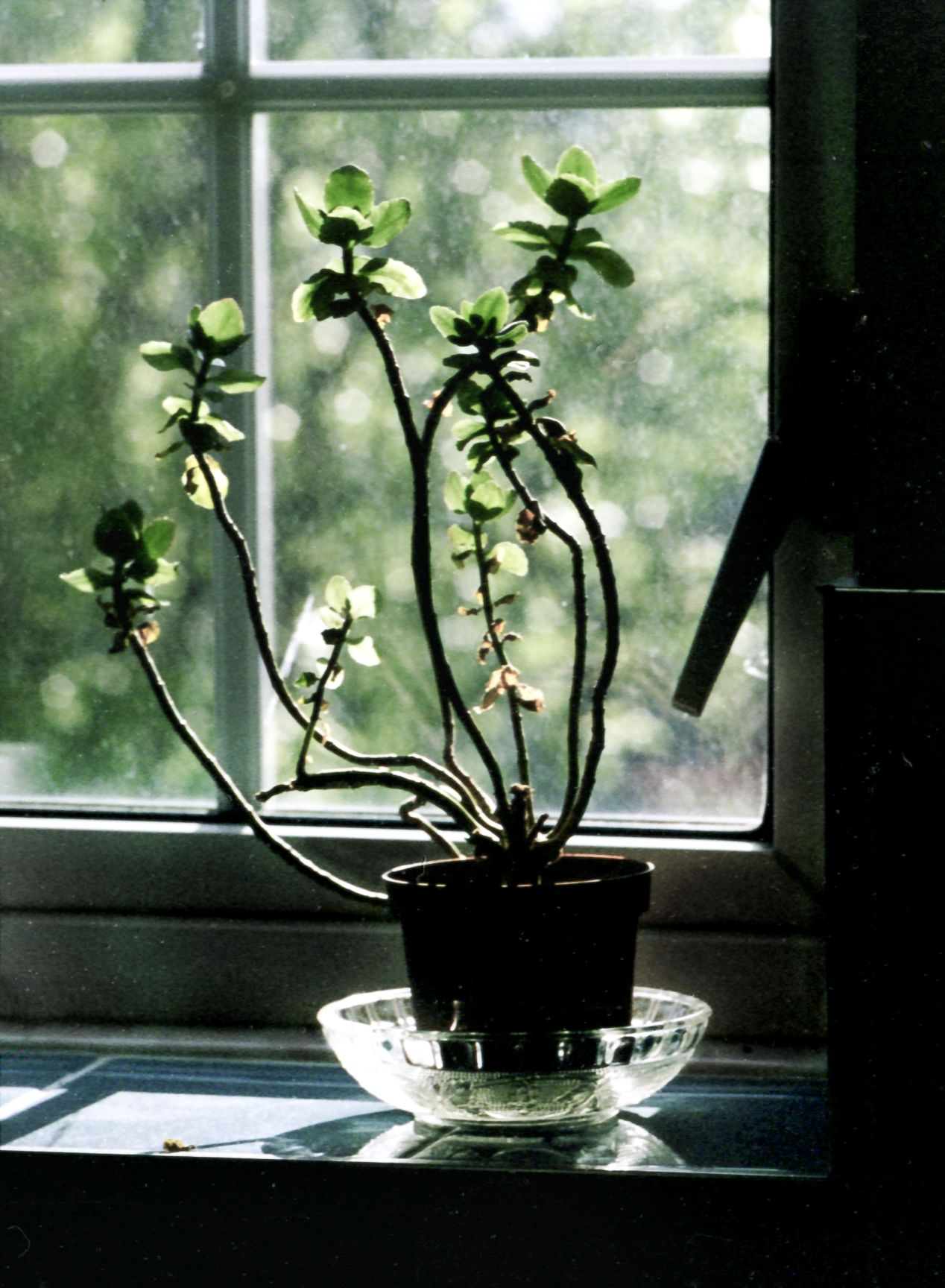 Windowsill, May 2020, taken with an Olympus PEN FV and a Zuiko 100/3.5 on Kodak Vision motion picture film, ISO 50. ECN-2 process carried out by a commercial lab.