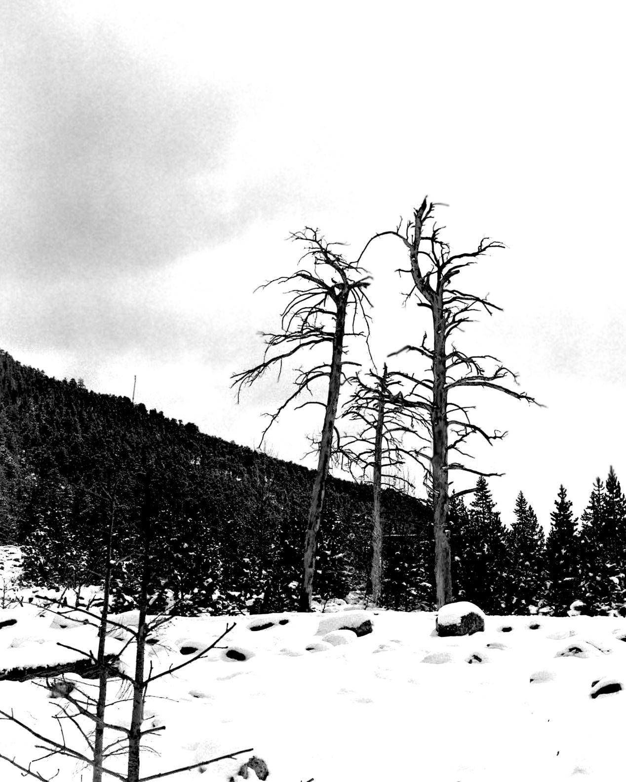 Rocky Mountain National Park, Alluvial fan. 4x5