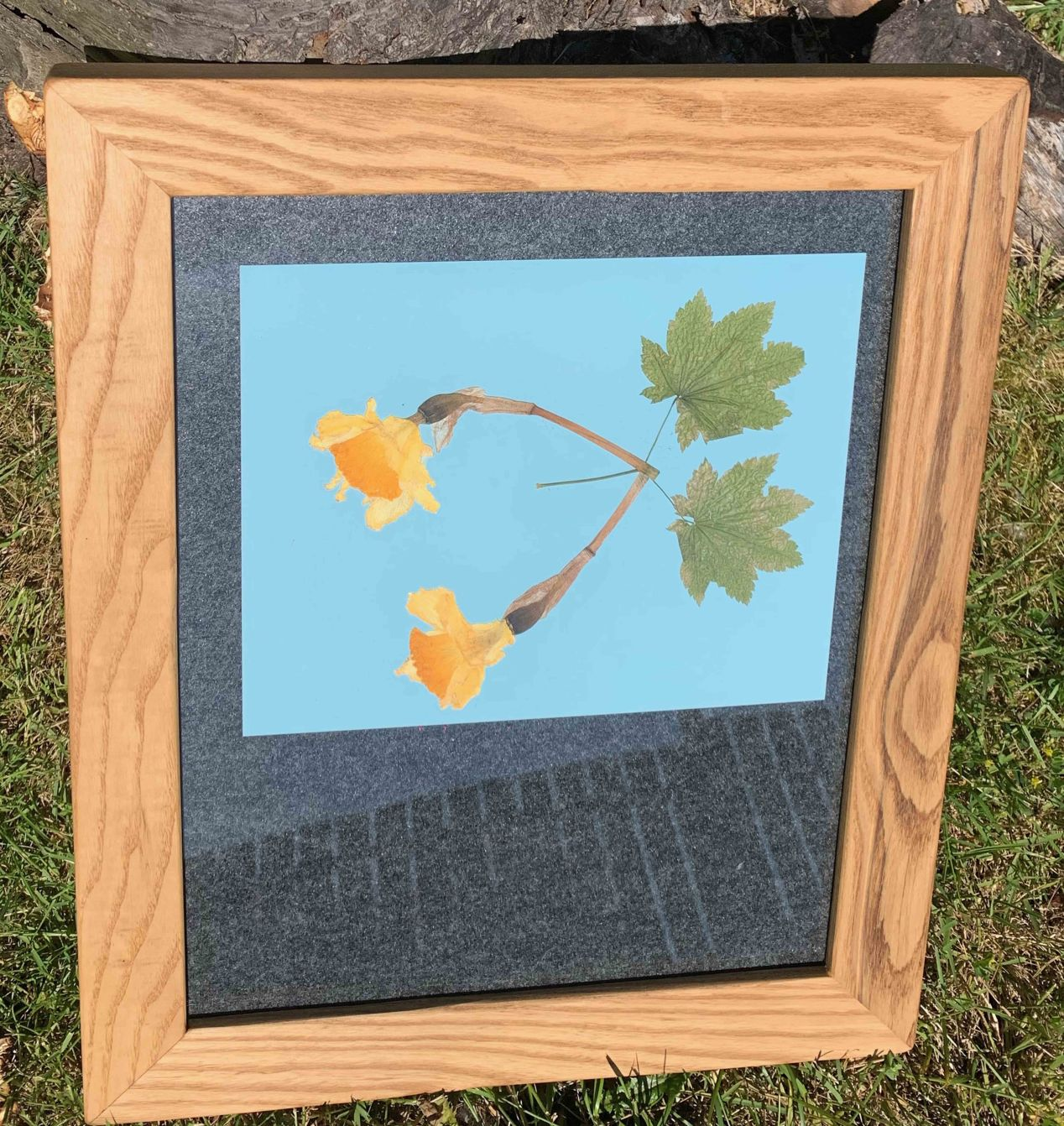 Assembled picture frame with photo paper facing the garden flowers being exposed to direct sunlight.