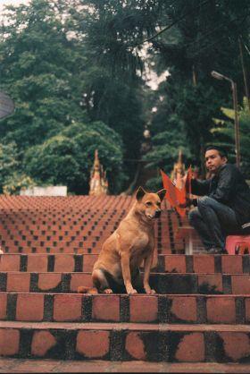 Soi Dogs