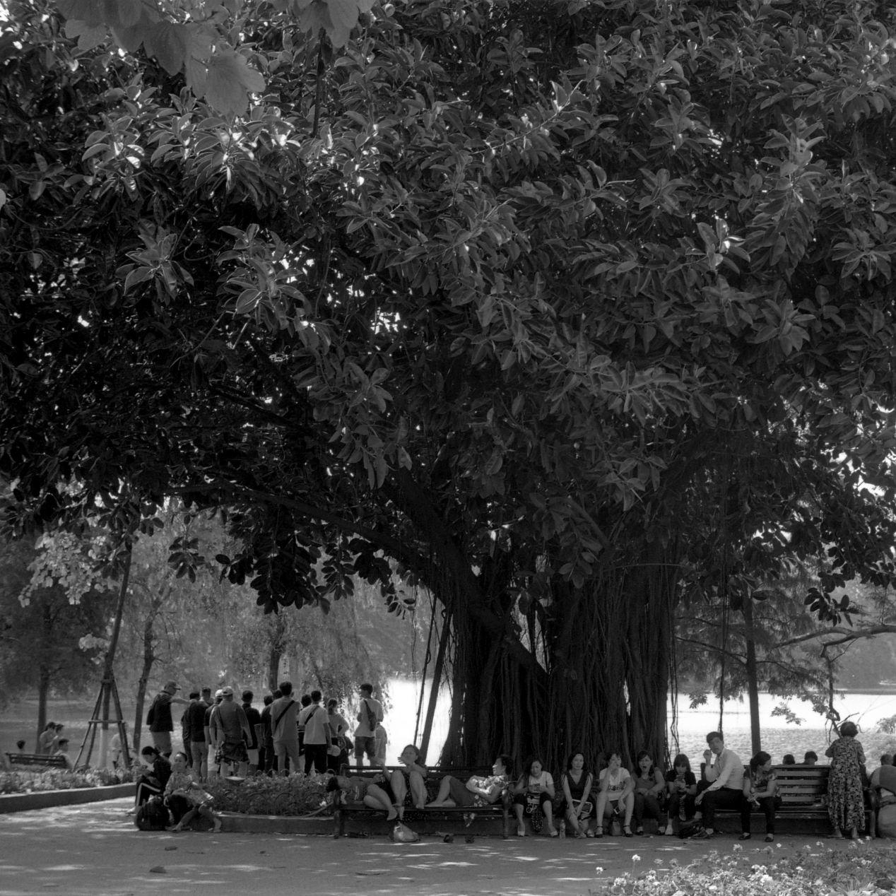 Under a tree, at the Hoàn Kiếm Lake.