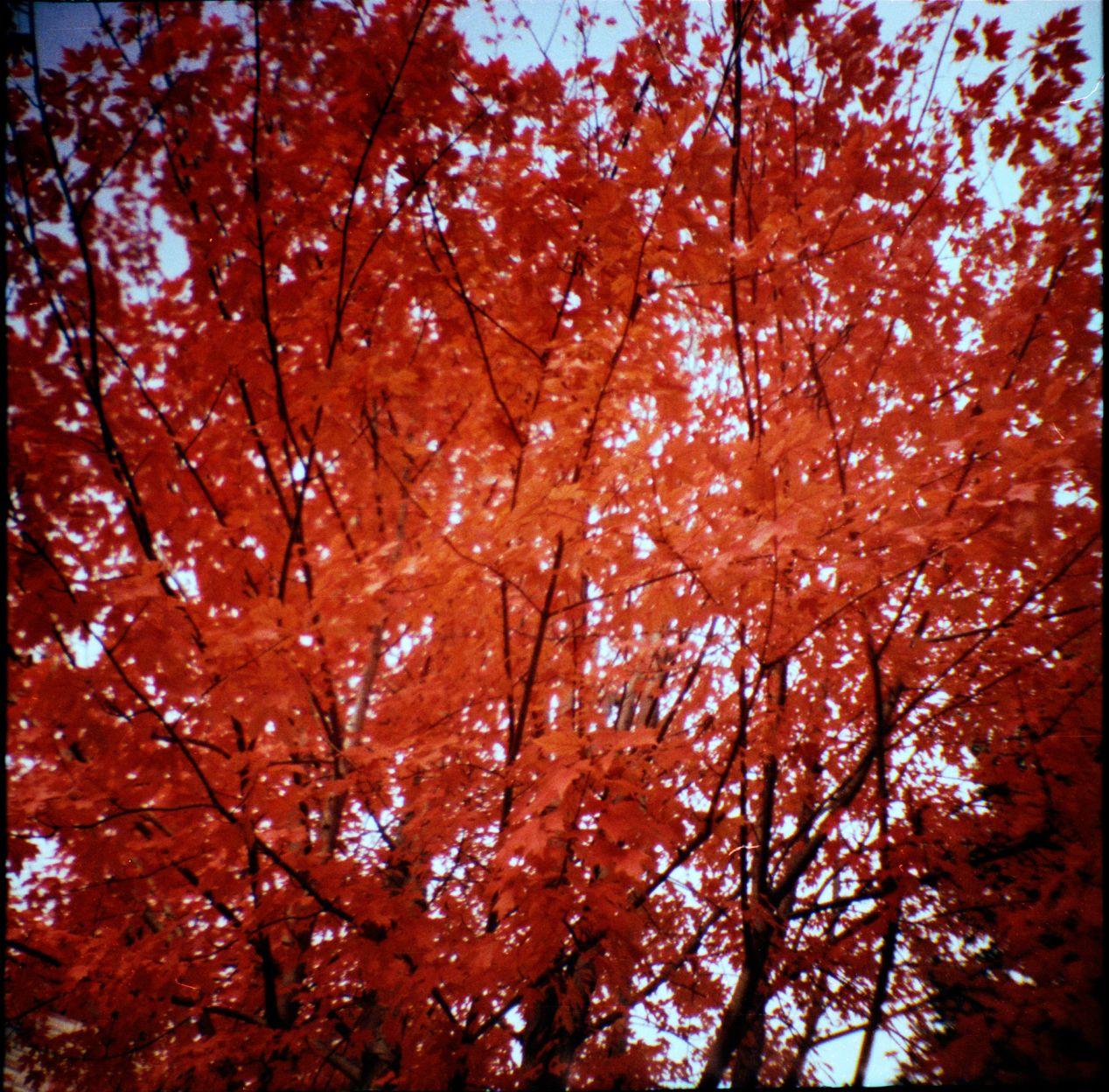 """""""Fall in the Sky."""" Camera: Diana Mini, shot sometime in 2010's in Toronto."""