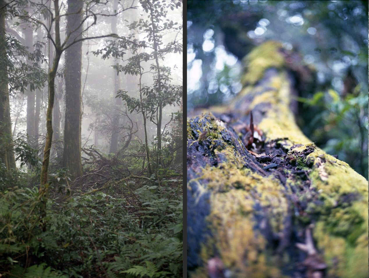"On the left, the photograph has a large depth of field, having most of the trees in focus. On the right, only a small slice of space is in focus due to a small depth of field. The balls of light at the distance have their own name: bokeh, which comes from Japanese ボケ, which means ""blur"" or ""haze."""