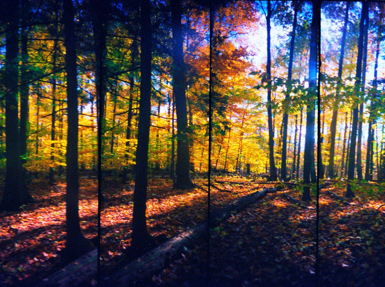 """""""Forest in the Fall."""" Camera: Super Sampler, shot sometime in 2010's in Mississauga."""