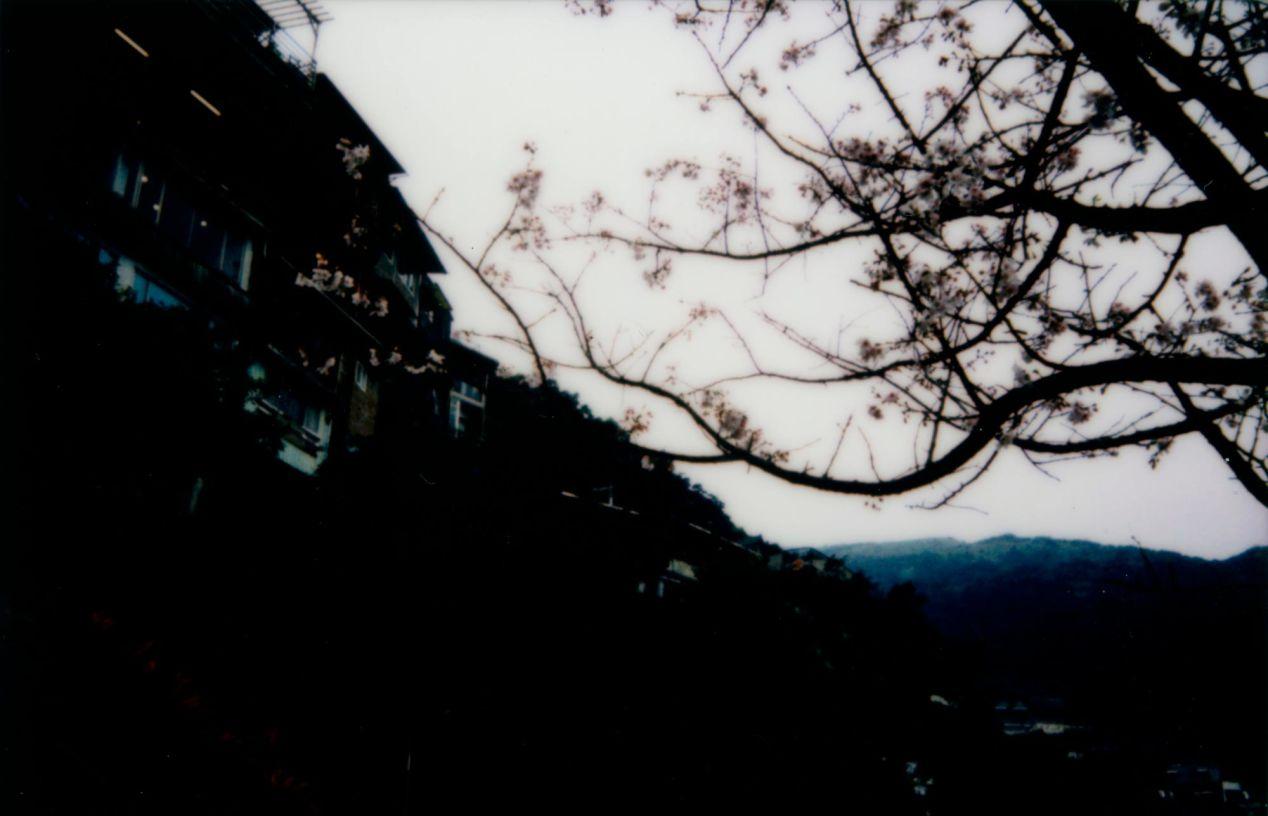 Cherry blossom tree in Jiufen. Shot on Instax Mini 90.