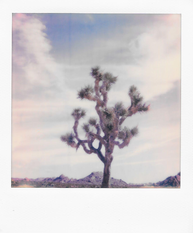 Joshua Tree National Park, California. Taken with a Polaroid 600 Camera and Polaroid Originals 600 Film