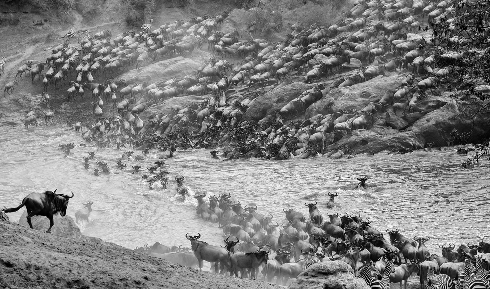 The great Wildebeests Migration