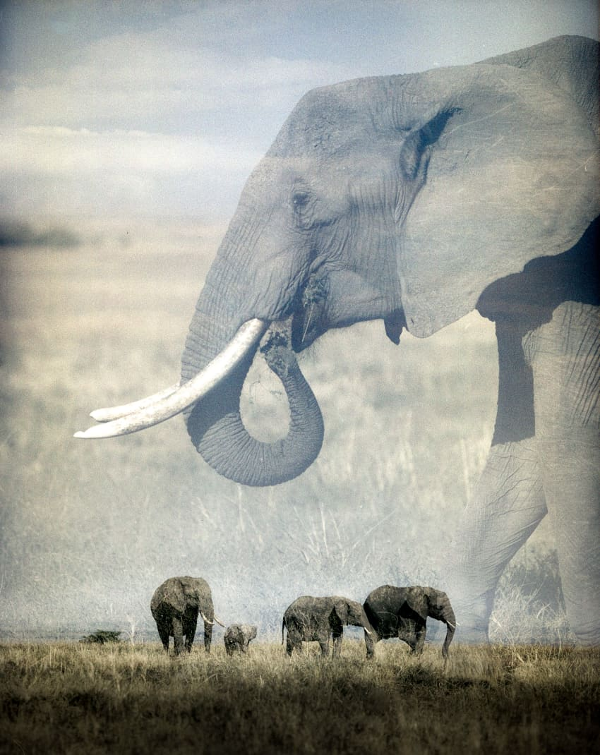 Elephant Lands