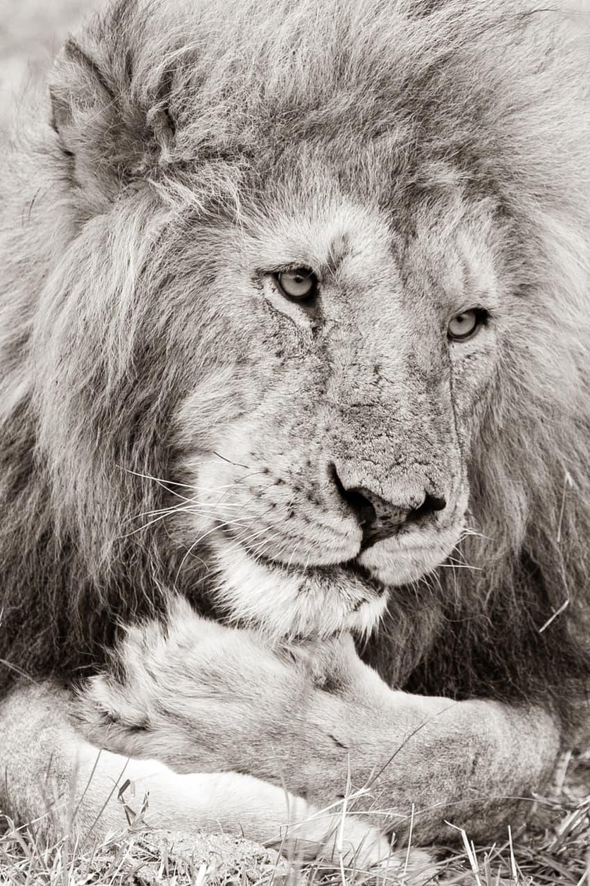 Mara Warrior