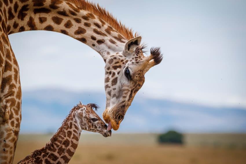 Kissed by Mum