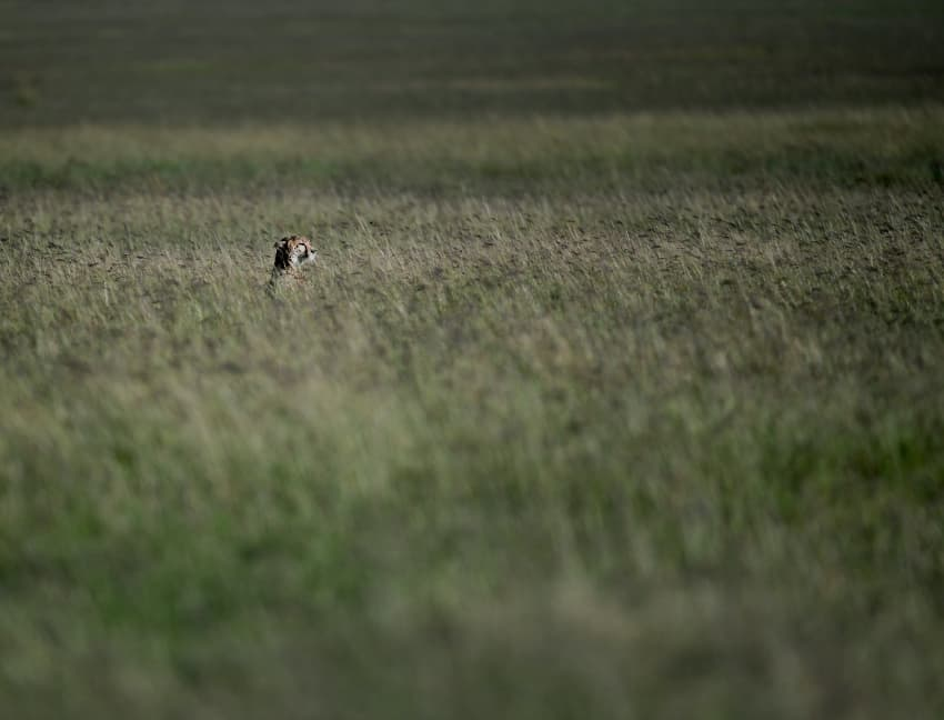 In a sea of grass