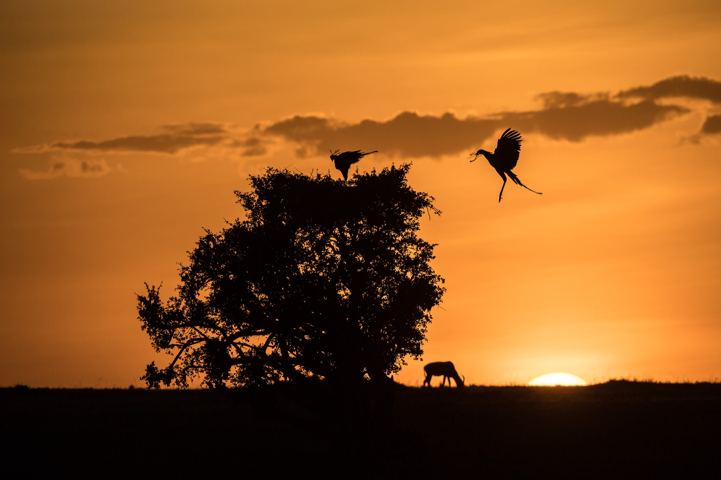 AMAZING AFRICA - A SUNRISE AT MASAI MARA !!!