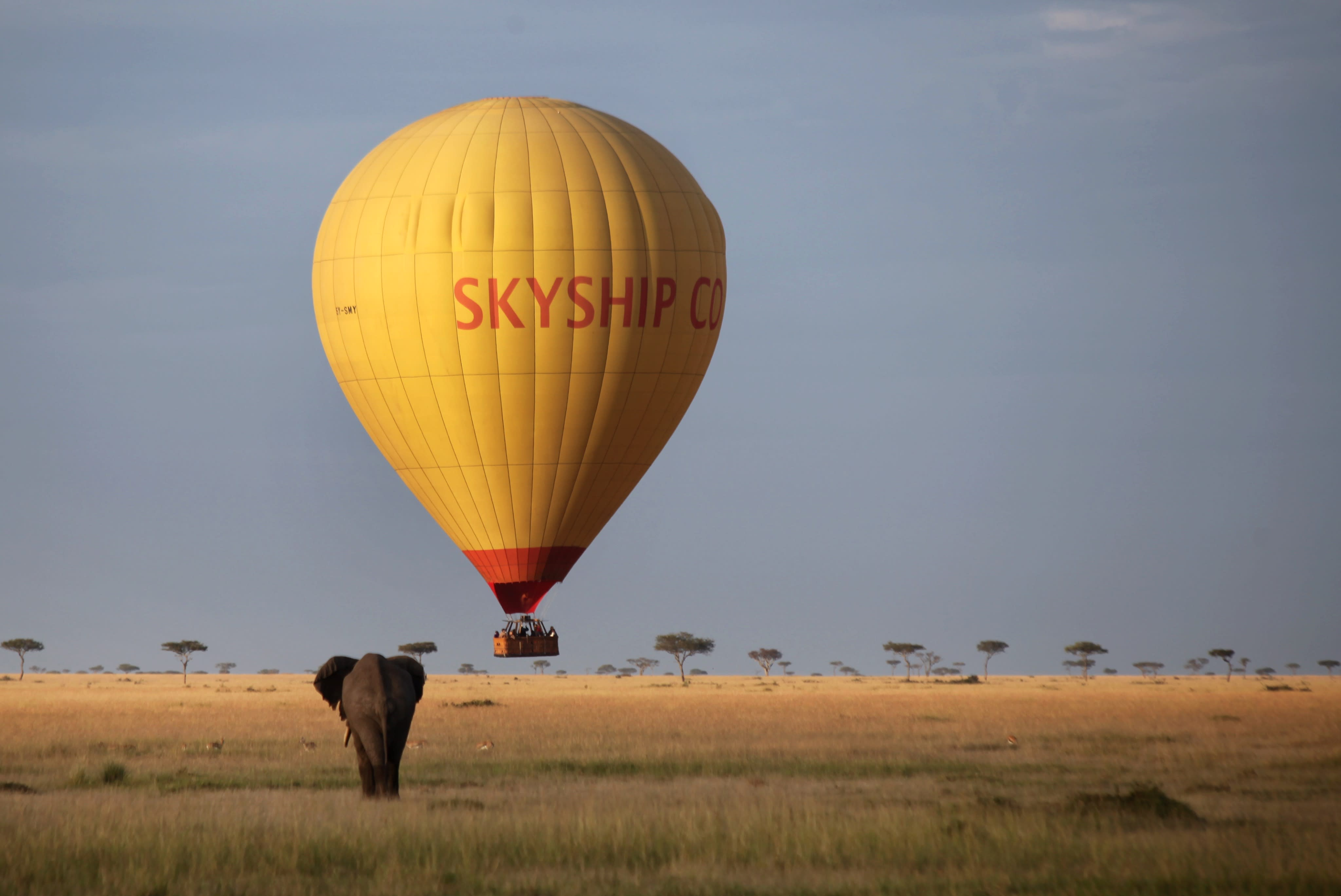 Elephant jelous for a balloon trip