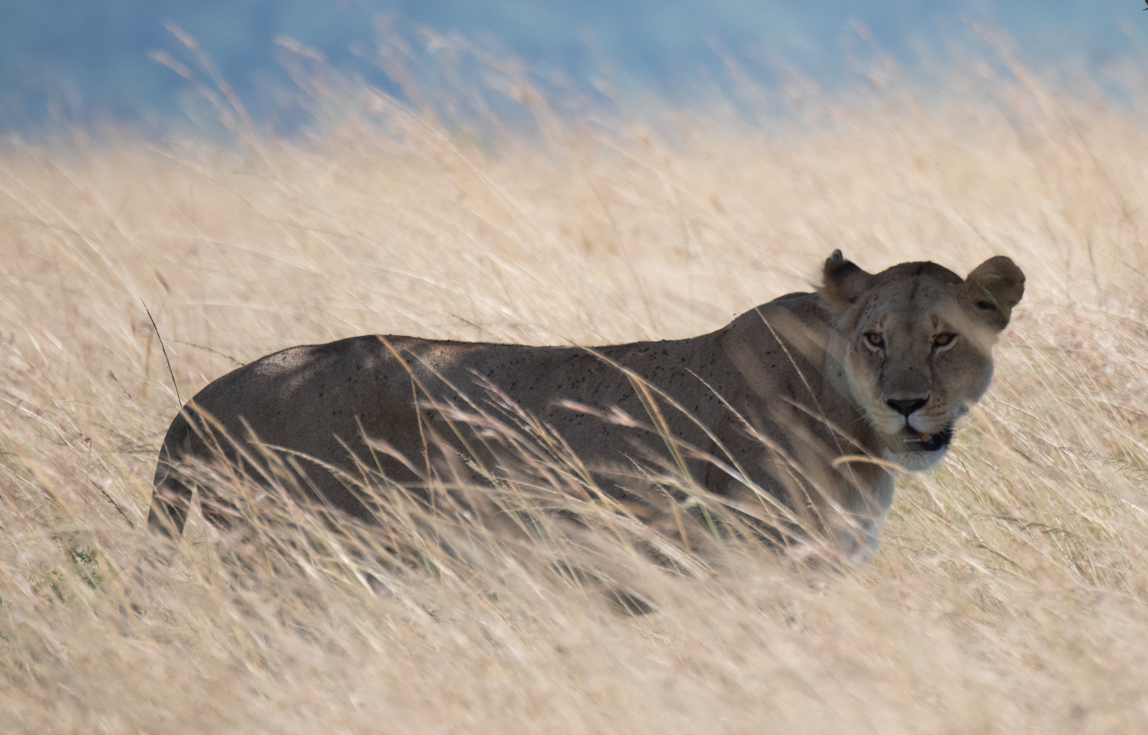 The gentle wild sides of the Mara.
