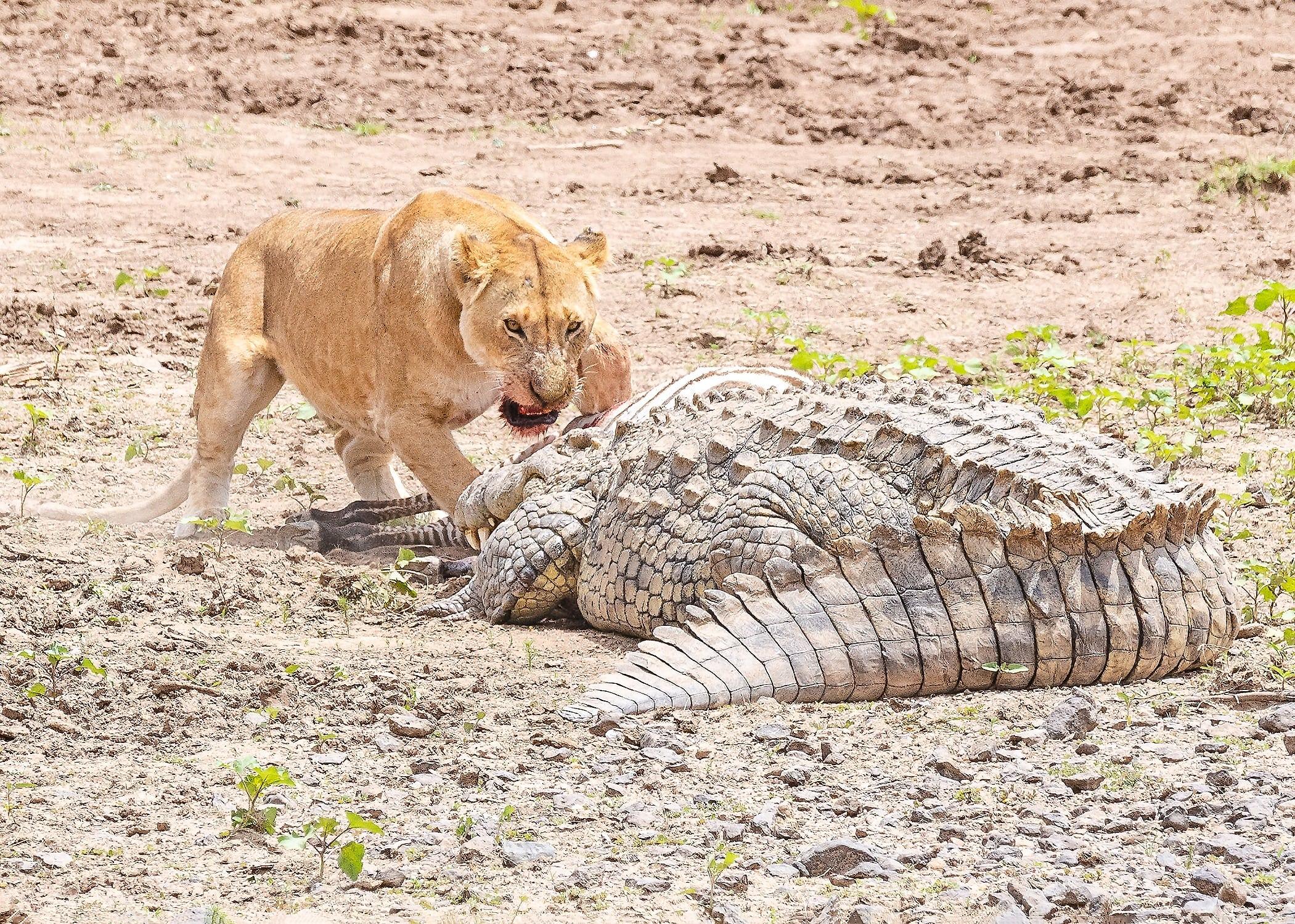Mara River Dispute