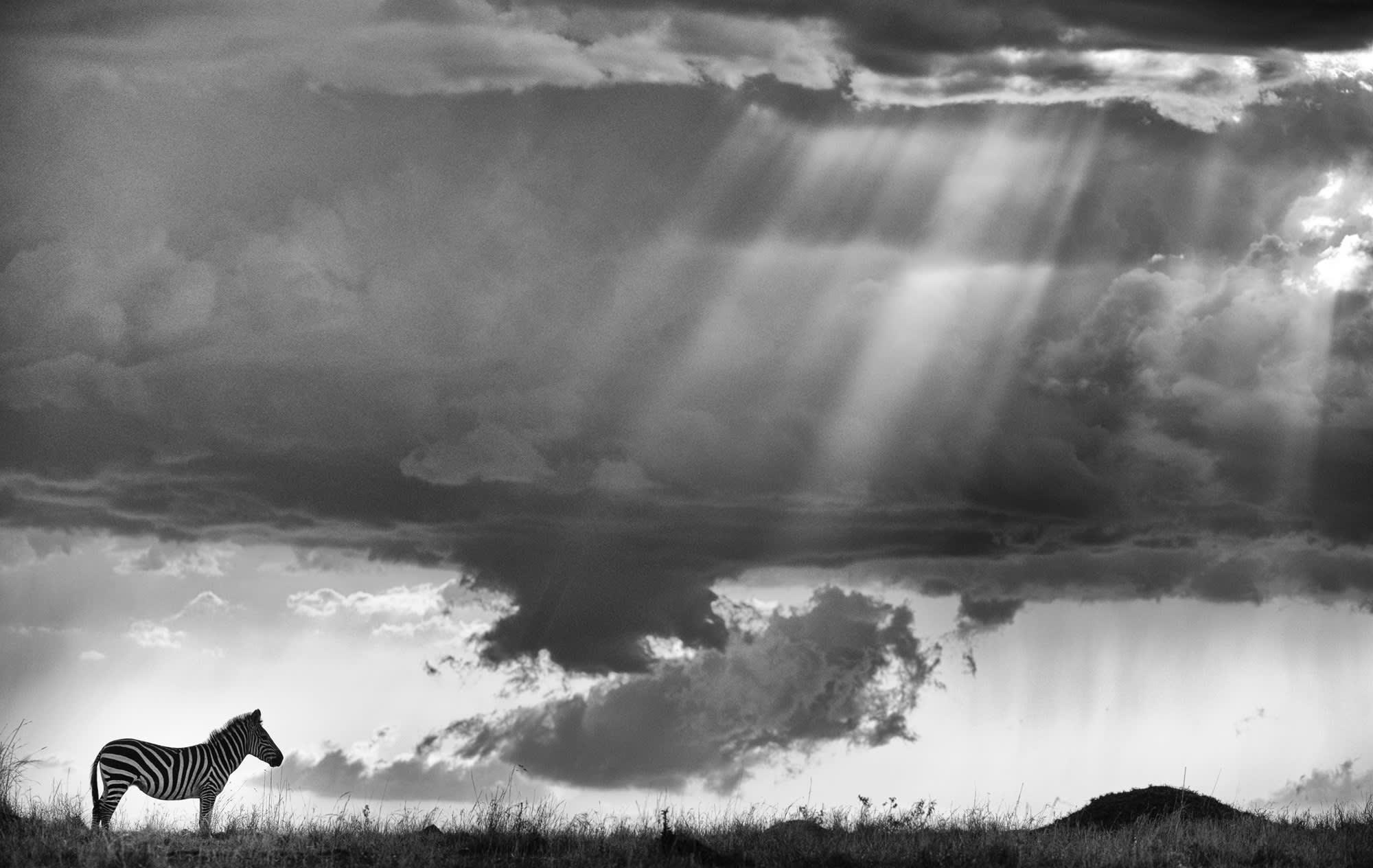 Black and white sunset streaks