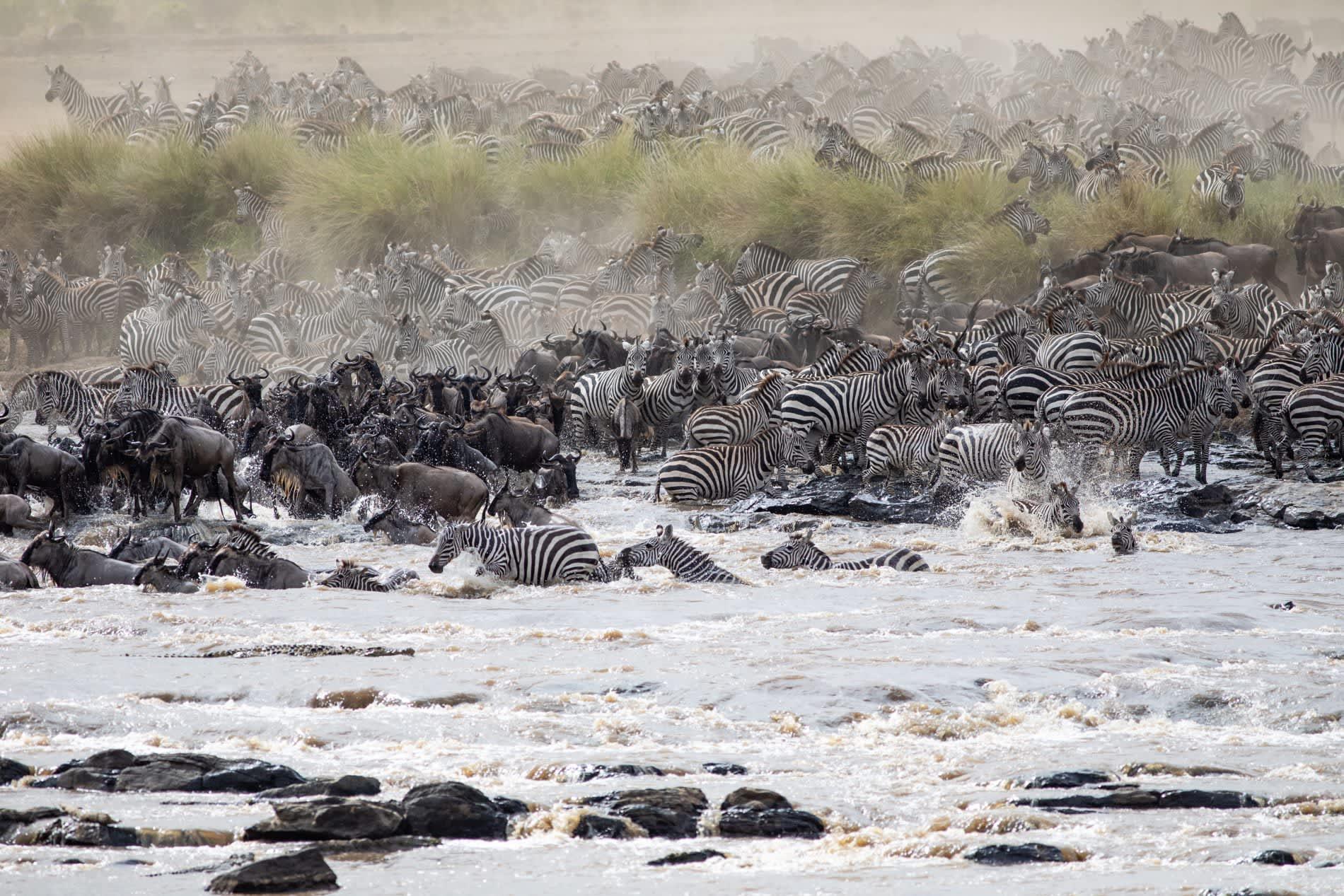 Crossing of the Mara River