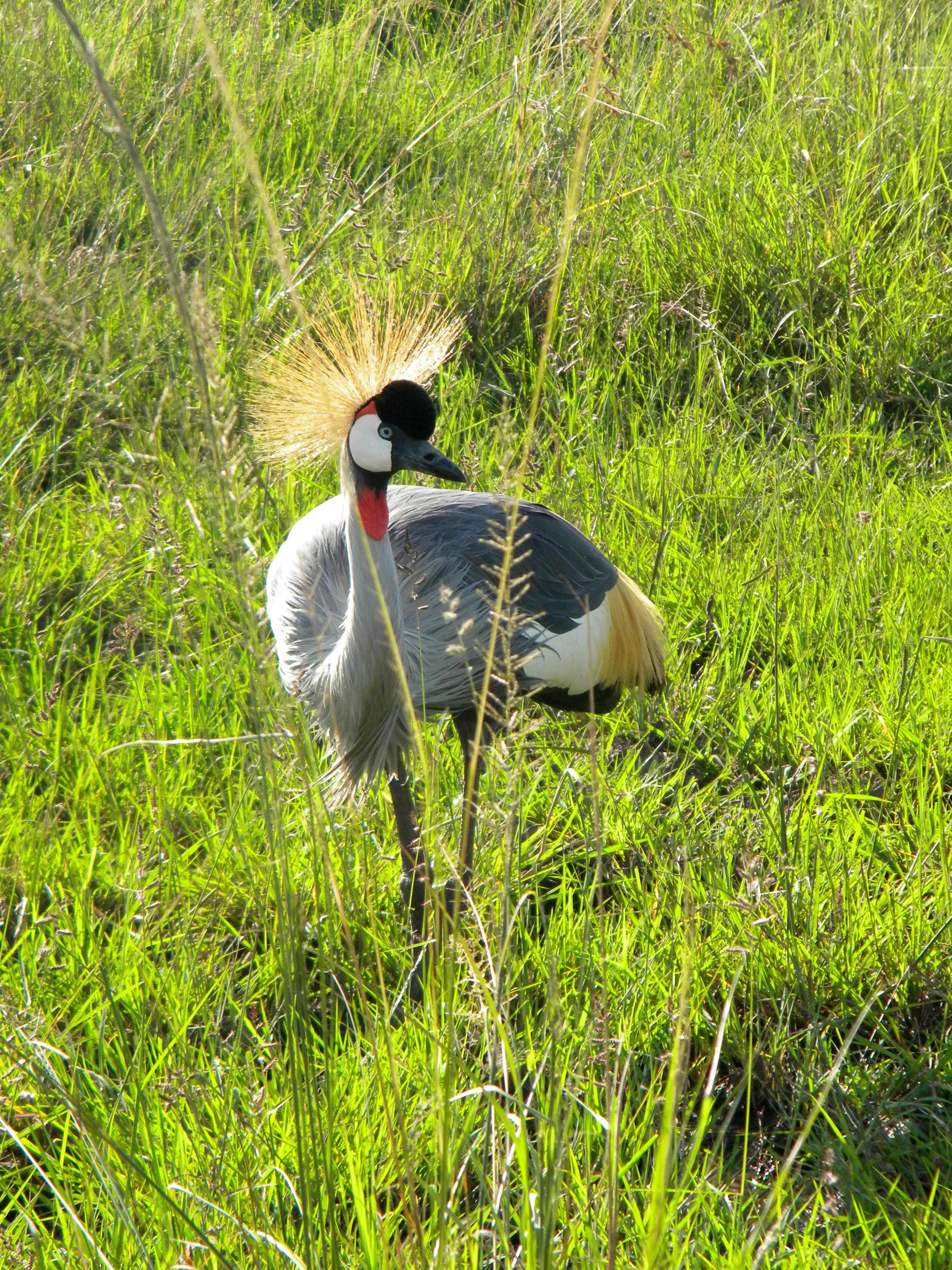 Royalty of the Mara