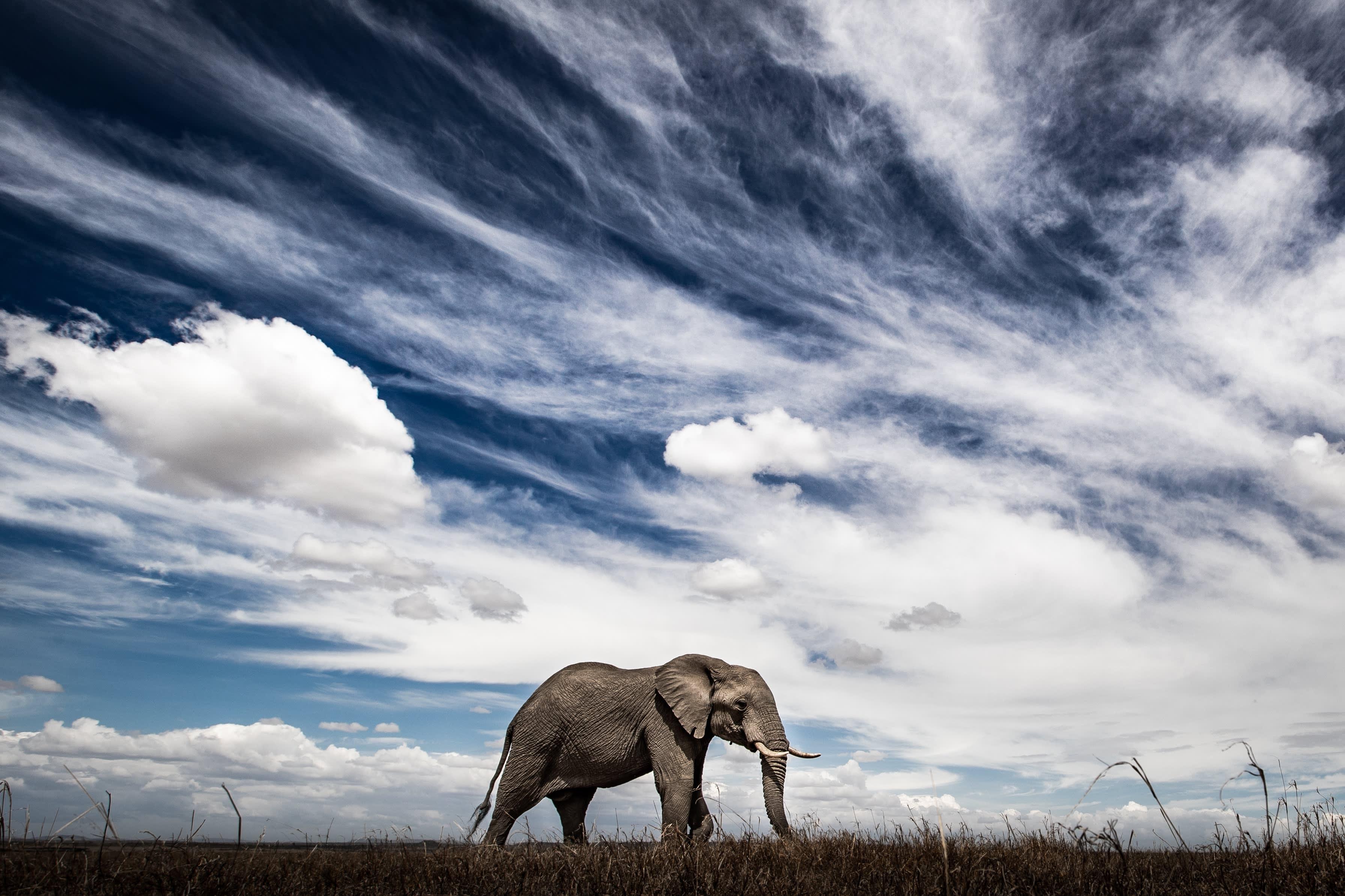Big Mara Skies