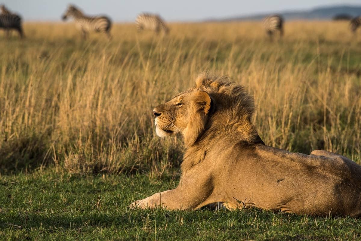 The King Enjoys The Breeze