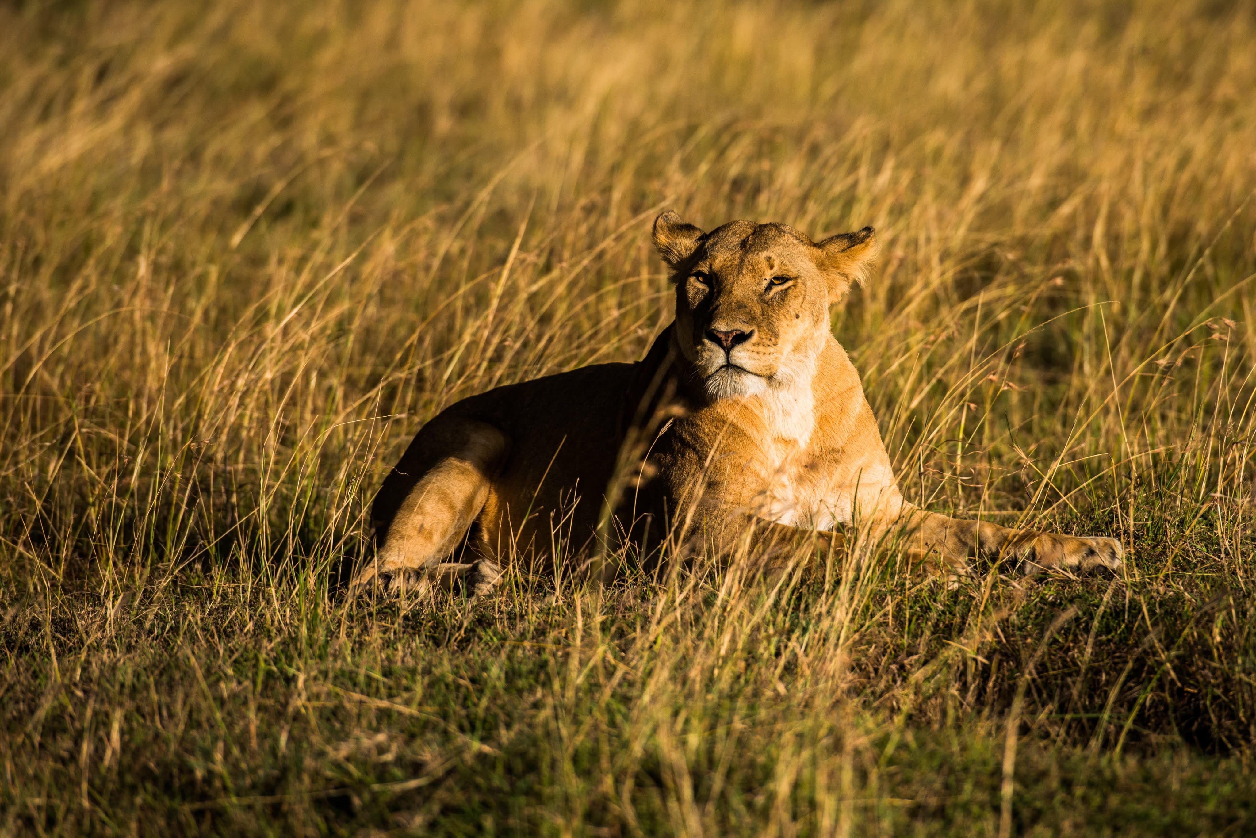 Mara Queen