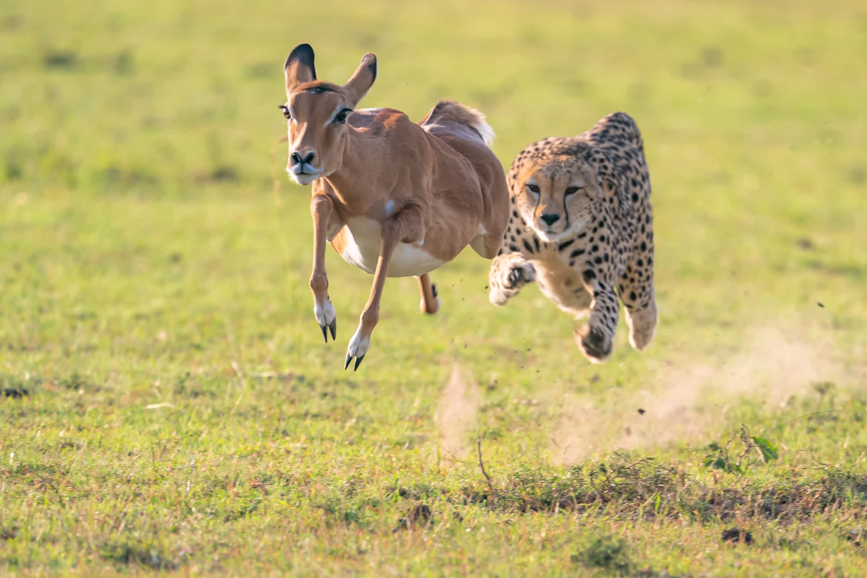 The Flying Hunt